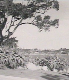 View on Georges River, 1947, image courtesy of SLNSW